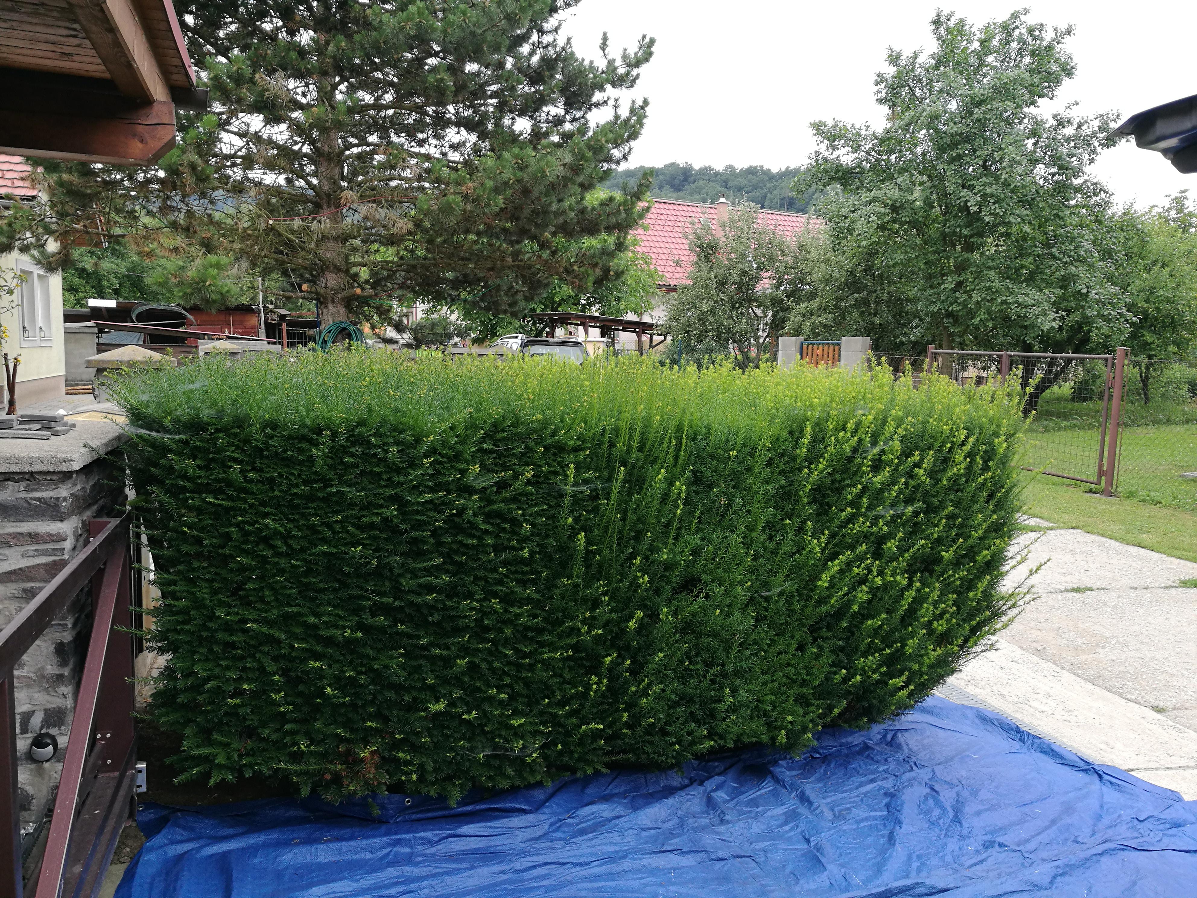 údržba záhrad Zvolen